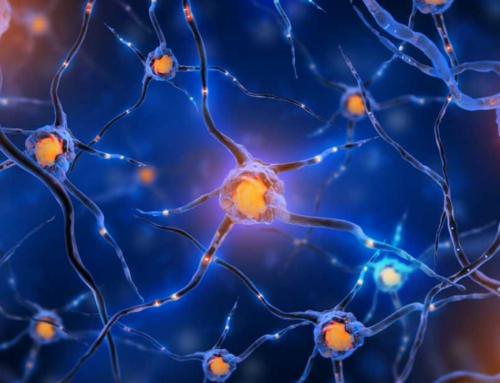 Identifier son neurotransmetteur dominant, une clef pour réussir